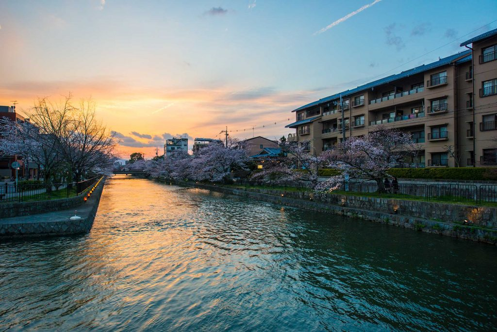 Cherry Blossoms over a river under a sunset